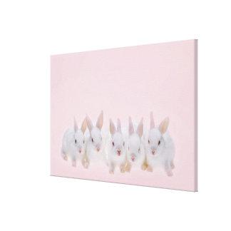 Five Rabbits Canvas Print