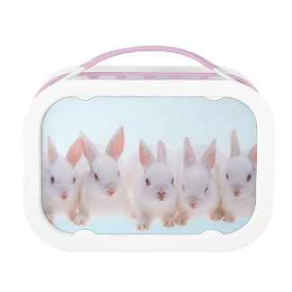 Five Rabbits Lunch Box