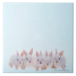 Five Rabbits Tile