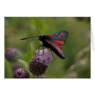 Five-spot Burnet Moth Card