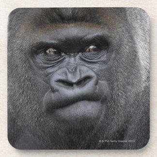 Flachlandgorilla, Gorilla Coaster