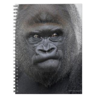 Flachlandgorilla, Gorilla gorilla, Notebook
