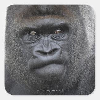 Flachlandgorilla, Gorilla gorilla, Square Sticker