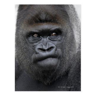 Flachlandgorilla, Gorilla Postcard