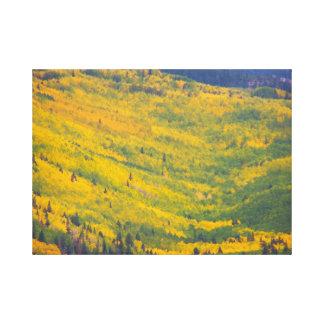 Flagstaff Arizona Aspens Canvas Print