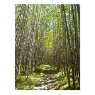 Flagstaff aspen postcard