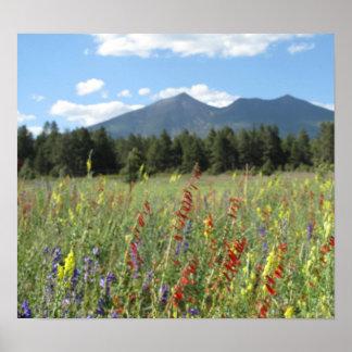 Flagstaff wildflowers poster