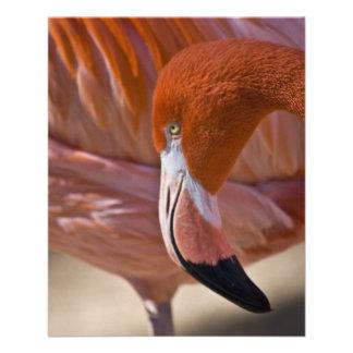 Flaming Flamingo Custom Flyer