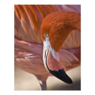 Flaming Flamingo Flyer Design