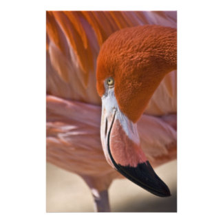 Flaming Flamingo Flyers