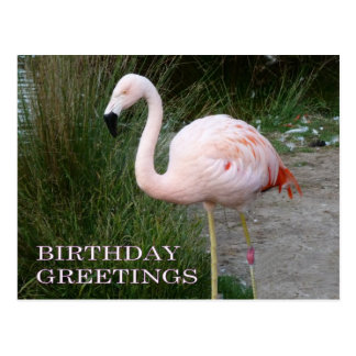 Flamingo Birthday Postcard