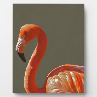 Flamingo Display Plaques