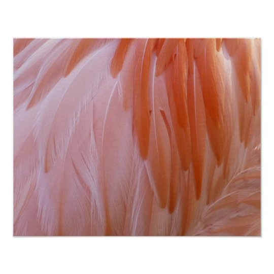 Flamingo Feathers Pink Abstract Nature Poster