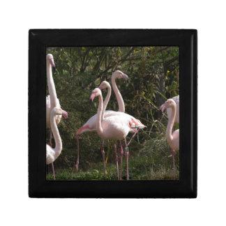 Flamingo Flock Gift Box