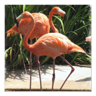 Flamingo Flock Invitation