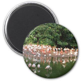 flamingo flock refrigerator magnet