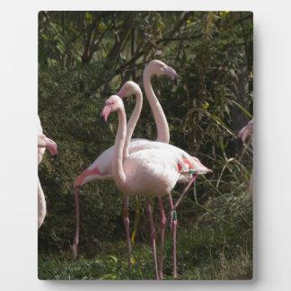 Flamingo Flock Plaque