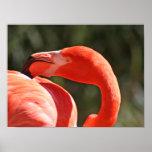 Flamingo - Look over the shoulder