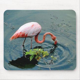 Flamingo of the Galapagos Mouse Mat