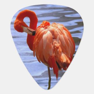 Flamingo on one leg in water plectrum