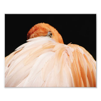 Flamingo Photo Print