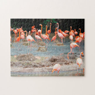 Flamingo Pond Singapore. Puzzles