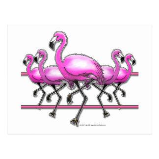 Flamingo Strip Post Card