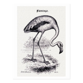 """Flamingo"" Vintage Illustration Postcard"