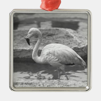 Flamingo wading in water B&W Christmas Ornament