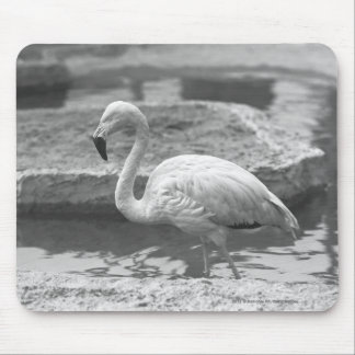 Flamingo wading in water B&W Mouse Mat