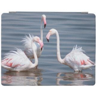 Flamingoes (Phoenicopteridae). Walvis Bay iPad Cover