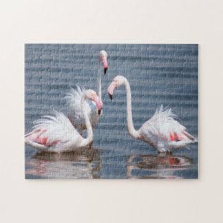 Flamingoes (Phoenicopteridae). Walvis Bay Puzzle