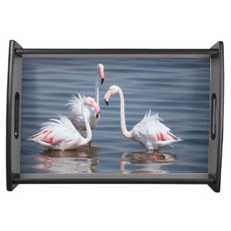 Flamingoes (Phoenicopteridae). Walvis Bay Serving Tray
