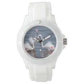 Flamingoes (Phoenicopteridae). Walvis Bay Watch