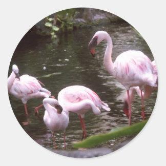 flamingos 1 classic round sticker