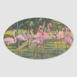 Flamingos at Miami, Florida Stickers