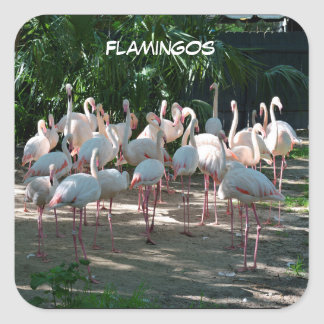 Flamingos at Zoo Square Sticker