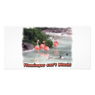 flamingos can't blush! photo card template
