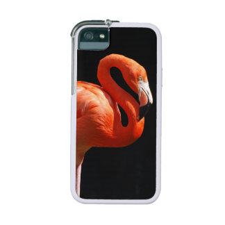 Flamingos iPhone 5 Cover