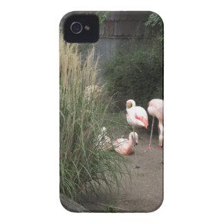Flamingos Case-Mate iPhone 4 Case