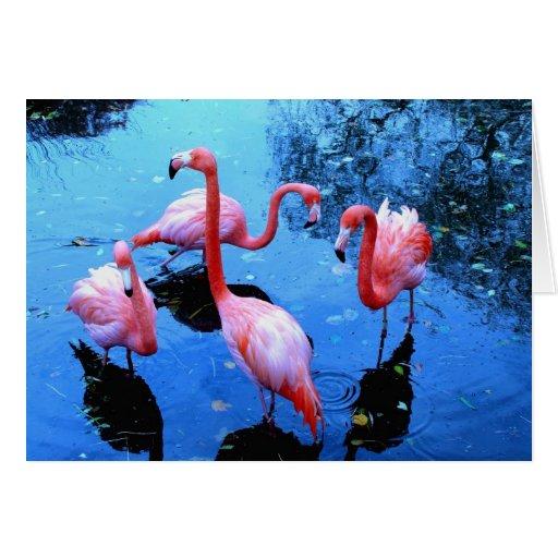 Flamingos dancing greeting cards