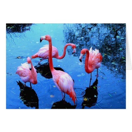 Flamingos dancing card