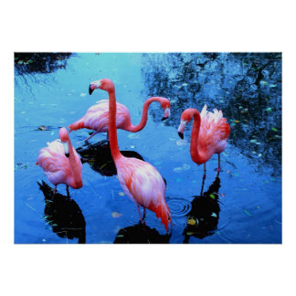 Flamingos Dancing Poster