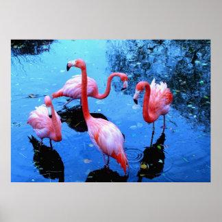 Flamingos Dancing Print