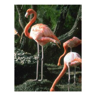 Flamingos Custom Flyer
