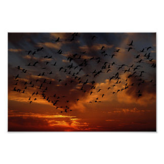 Flamingos flying at sunset Poster