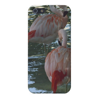 Flamingos Covers For iPhone 5