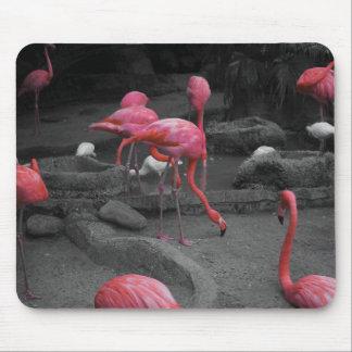Flamingos! Mouse Mat