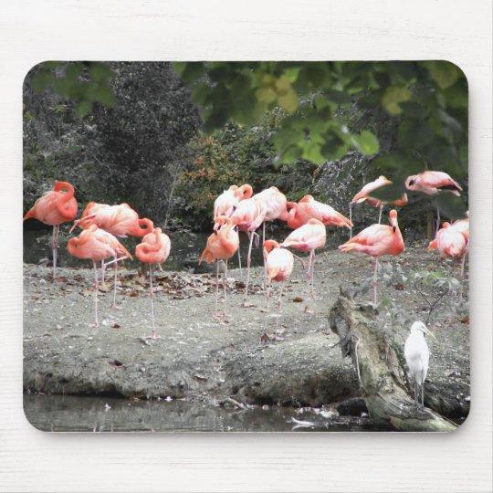 flamingos mouse pad