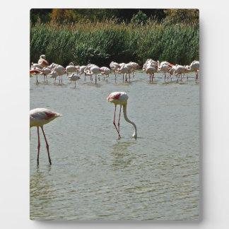 Flamingos Plaque